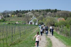 VIII. Akali bor napja mandulavirágzáskor @ Balatonakali | Magyarország
