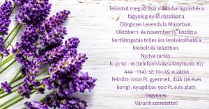 Tekintse meg az őszi másodvirágzást és a fagyokig nyíló rózsákat @ Levendula Major | Dörgicse | Magyarország