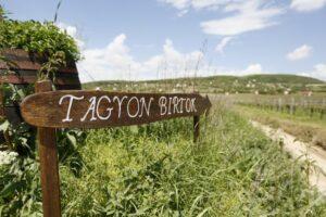 5+1 tételes borkóstoló disznótorossal a Birtokon @ Tagyon Birtok