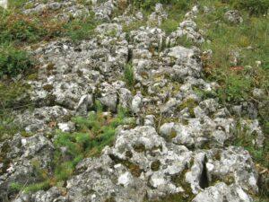 Magyar Nemzeti Parkok Hete családbarát geotúra 2 helyszínen @ Balaton-felvidéki Nemzeti Park