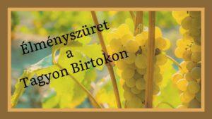 Élményszüret a Tagyon Birtokon @ Tagyon Birtok